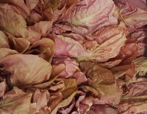 radicchio-rosa-verona